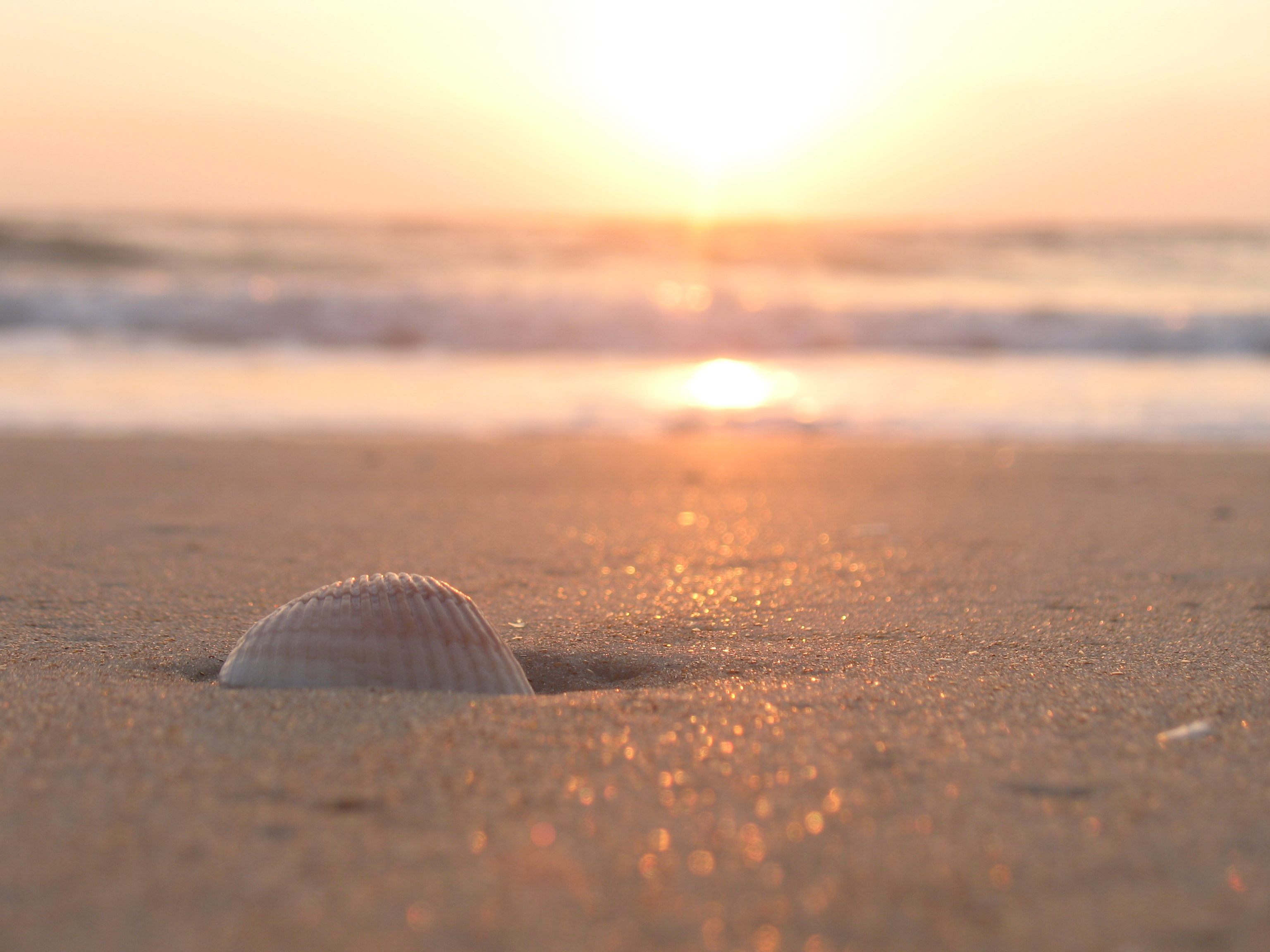 Seashell, Ormond Beach