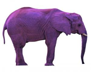 purple-elephant.jpg